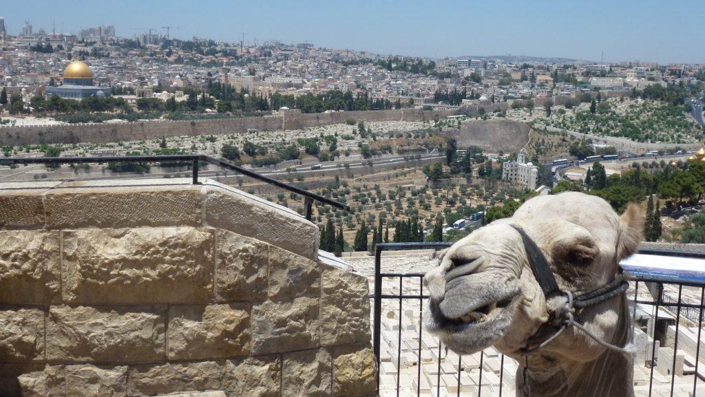 Israel_MonteOlivos10
